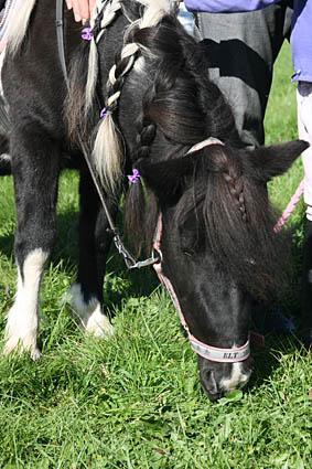 ponny111_6718