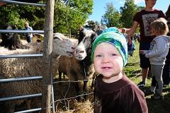 otto_sheep13